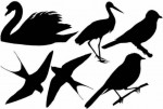Mały ornitolog cz. II
