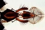 Chrząszcze, muchy i motyle pod mikroskopem