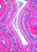Zdrowe tkanki człowieka część I