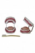 MA-403 Model jamy ustnej (plus szczoteczką do zębów)