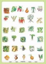 Duo - Warzywa z naszego ogrodu