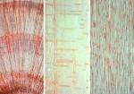 Różnorodność drewna, przekroje.